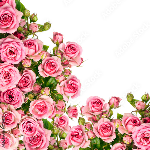 Beautiful Roses Bouquet Flowers Background. Copy spase, flat lay, top view, Holiday symbol. Greeting card, isolated on white © IULIIA AZAROVA