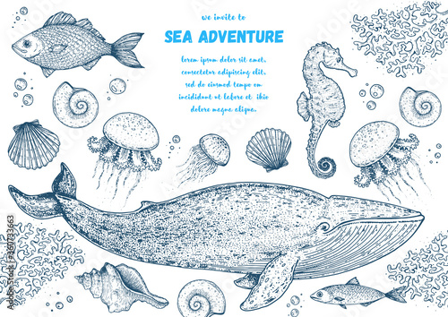 Sea animals hand drawn collection. Sketch illustration. Blue whale, sea horse, jellyfish, fish, seaweed, seashells illustration. Vintage design template. Undersea world.
