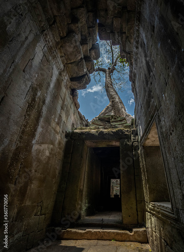 Cuadros en Lienzo Árvore nascendo no topo das ruínas de tempo no Cambodia