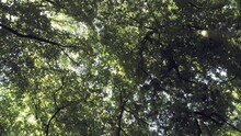 Looking Up In A Green Fresh Su...
