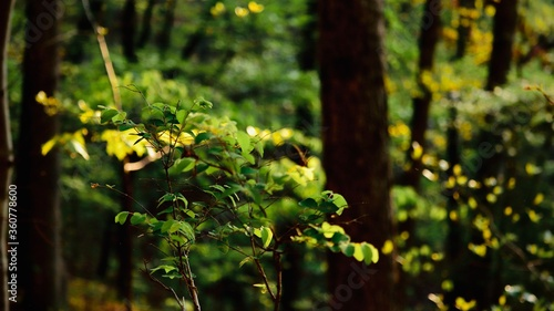 Fotografering Forest trees and leaved in the summer time.