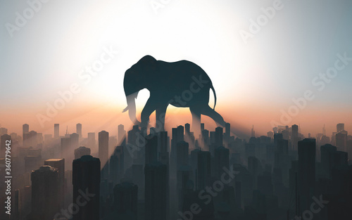 Elephant habitat Fototapet