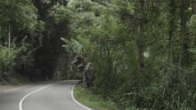 Peaceful Road Through The Lush...