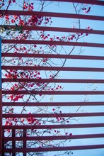 Vertical Image Of Red Bougainv...