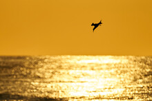 Sea Birds At Sunrise Over The ...