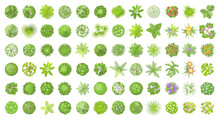 Vector Set. Trees Top View. Different Plants And Trees Vector Set For Architectural Or Landscape Design. (View From Above) Nature Green Spaces.
