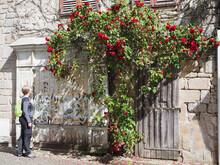 Femme Admirant Les Roses Sur U...