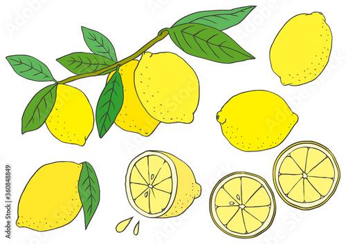 枝に実ったレモン カット 輪切り ベクターイラスト Canvas Print