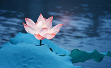 Lotus Flower Blooming In Summe...