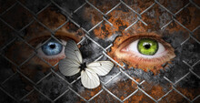 Human Eyes Behind Metal Chainl...