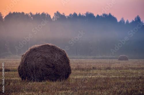 Fotografie, Obraz Straw bales on farmland on autumn sunrise.