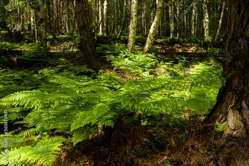 Beautiful scenery captured in the forest with green trees and plants - 360870481