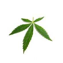 Cannabis Leaf, Marijuana Isolated On White Background