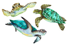 Sea Turtles On A White Background, Watercolor Drawing Illustration.