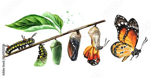 Foto Butterfly metamorphosis development stages, caterpillar larva, pupa, adult insect set