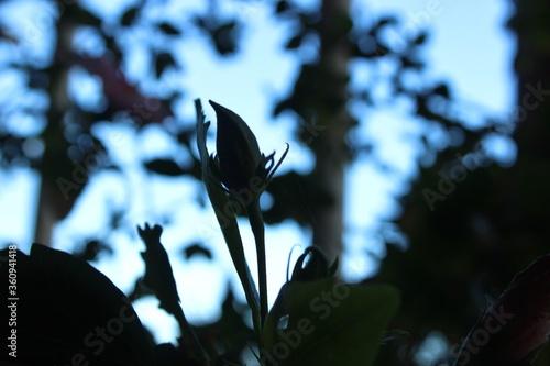 Photo una planta en crecimiento