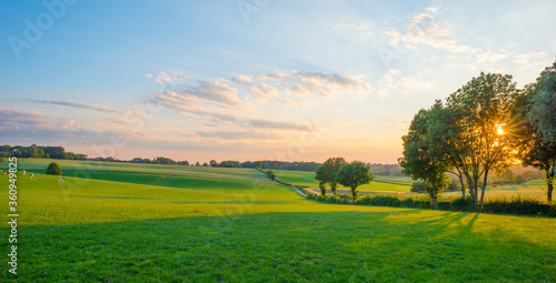 Fotografia Grassy fields and trees with lush green foliage in green rolling hills below a b