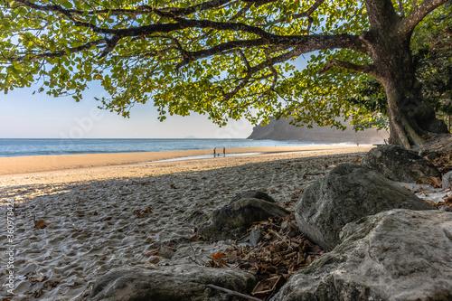 Valokuvatapetti rochas, arvore e praia