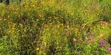 A Field Of Wildflowers Growing...