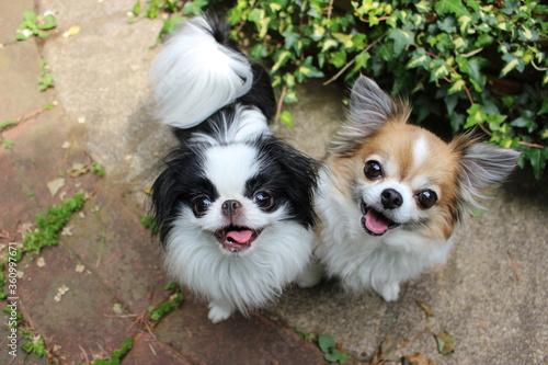 Fotomural 仲良しの笑顔の犬