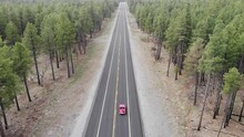 4K Drone In Pine Tree Forest F...