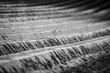 canvas print picture - Nahaufnahme von einem Ackerboden