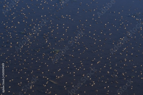 High angle shot of shore flies on a pond at daytime Canvas Print