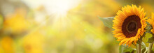 Wonderful Sunflower Field With...