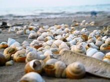 Shells On The Beach Of River O...