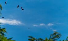Uccelli In Volo Nel Cielo Azzu...