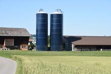 Wheat Field In Switzerland Cou...