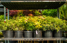 Plants And Flowers For Sale In...