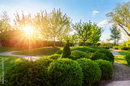 Fototapeta Generic green fresh round spheric boxwood bushes wall with warm summer sunset light on background at ornamental english garden at yard. Early autumn green natural landscape park background obraz