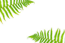 Green Fern Leaves Isolated On ...