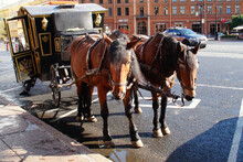 Horses With A Carriage For Tourists Ride Around The City