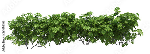 3d Render Brush Tree Isolated  on white Canvas Print