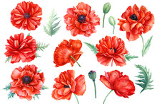 Set Of Flowers, Red Poppies, B...
