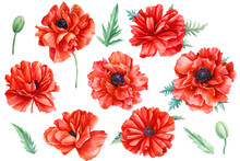 Red Flowers, Poppies, White Ba...