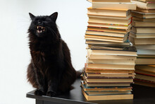 Black Cat Sitting On The Table...