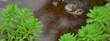Close up shot of the Myriophyllum aquaticum plant