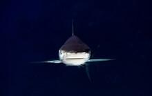 Symmetrical Shark Underwater P...