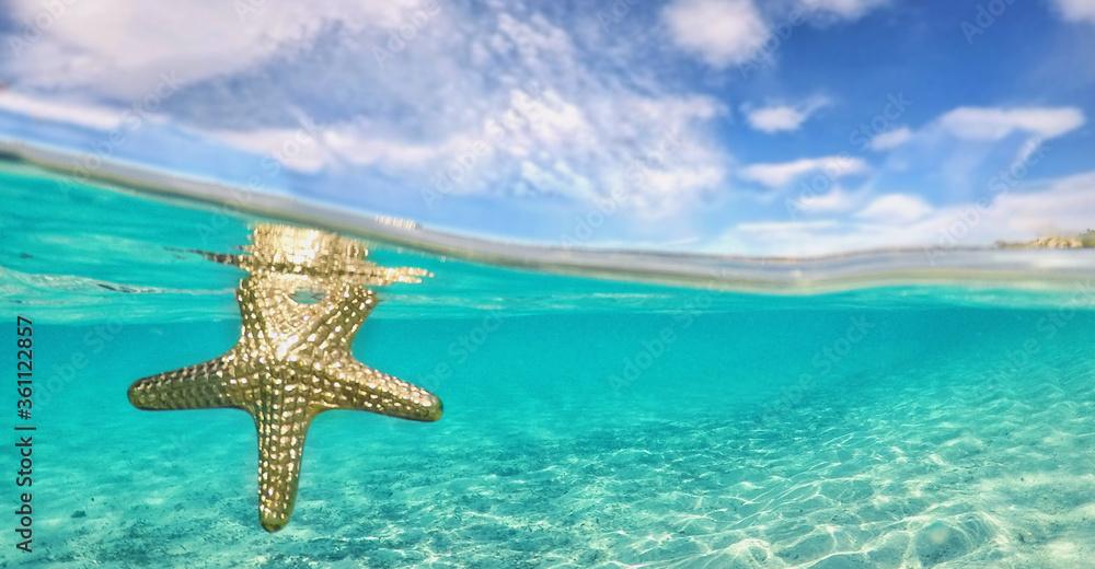 Fototapeta goldener Seestern im Meer