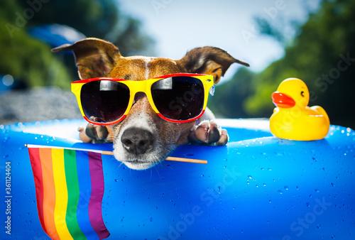 surfer dog  at the beach gay pride