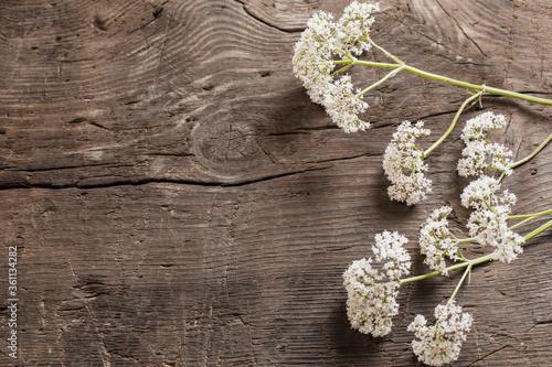 valeriana officinalis on old dark wooden background