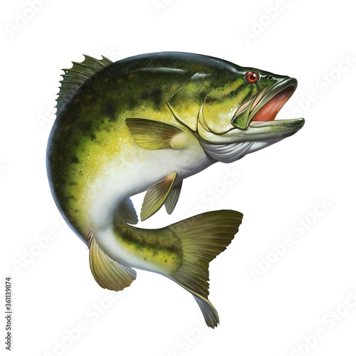 Fototapeta Larged bass jumps out of water isolate realistic illustration. Big bass perch fishing in the usa on a river or lake at the weekend. obraz
