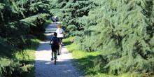 Amici In Giro In Bicicletta Ne...