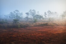 Bog In A Morning Mist At Sunri...