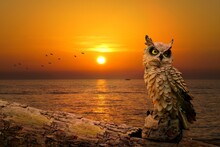 Owl Scene In The Sunset