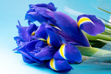 Macro Photo Of A Bouquet Of Bl...
