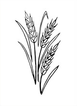 Vector Doodle Spikelet Of Whea...